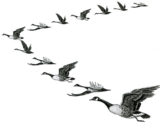 GeeseFormation