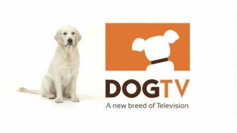 DirecTV-to-launch-DogTV-next-month-