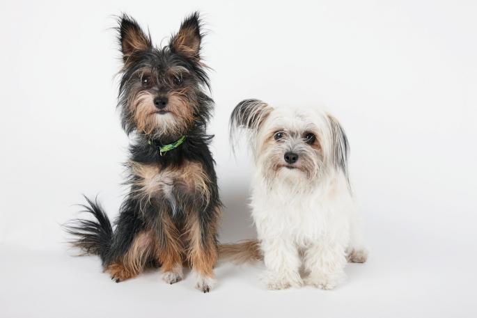 dva-psa
